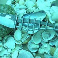 Bulisova Dead fish 1
